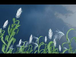 Tall Reed Grass 3d model