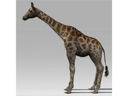 Giraffe Animal Rigged 3d model