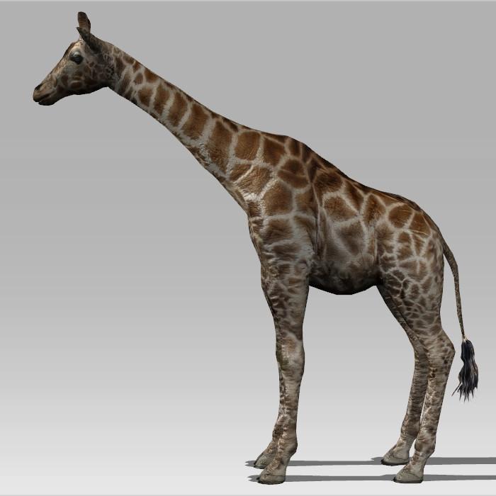 Giraffe Animal Rigged 3d Model Collada Autodesk Fbx Files