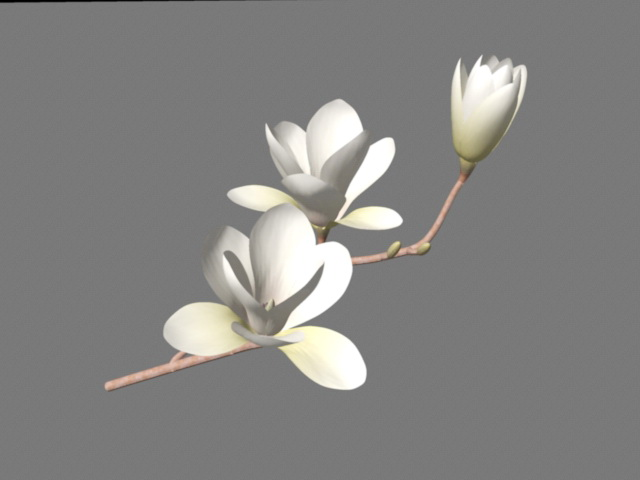 Southern Magnolia Flowers 3d Model Maya Files Free Download