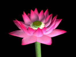 Beautiful Lotus Flower 3d model