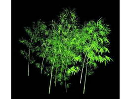 Outdoor Bamboo Plants 3d model
