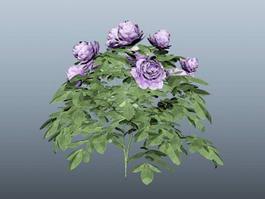 Purple Peony Plant 3d model