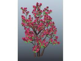 Azalea Tree 3d model