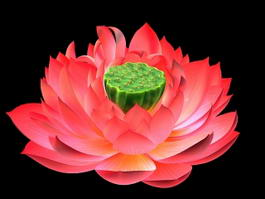 Lotus Bloom 3d model