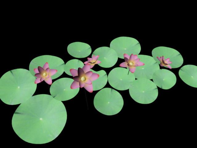 Water Lilies Flowers 3d model