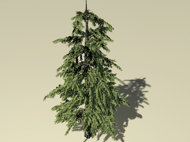 Pond Cypress Tree 3d model