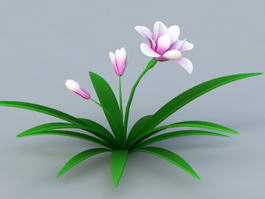 Orchid Plant with Pink Flowers 3d model