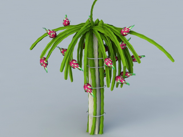 Dragon Fruit Plant 3d Model 3ds Max Files Free Download