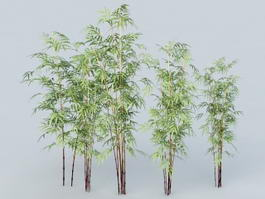 Bamboo Forest 3d model
