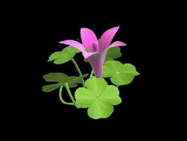 Clover Plant with Flower 3d model