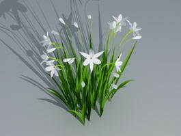 White Cymbidium Orchid Plant 3d model