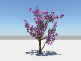 Purple Azalea Plants 3d model