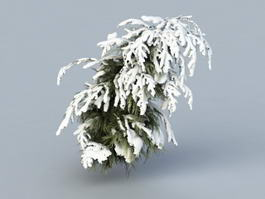 Winter Cedar Tree 3d model
