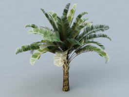 Raphia Palm Trees 3d model