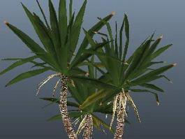 Yucca Tree Plant 3d model