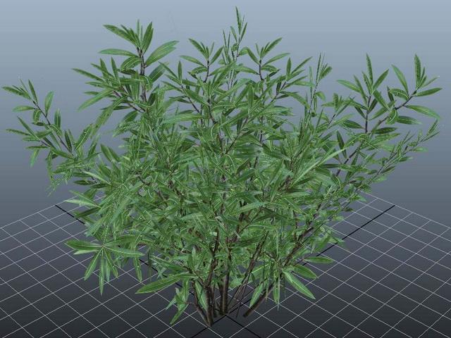 Oleander Plant 3d model