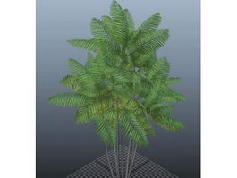 Macarthur Palm Tree 3d model