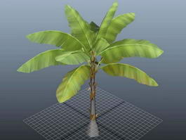Three Banana Tree 3d model