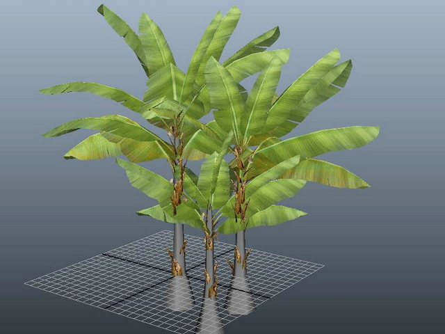 Three Banana Tree 3d Model Autodesk Fbx Files Free