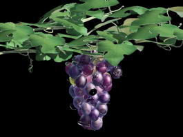 Grape Vine with Fruit 3d model