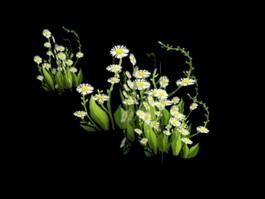 Wildflower 3d model