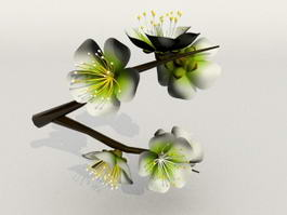 Animated Plum Blossom 3d model