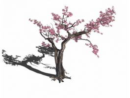 Old Plum Tree 3d model