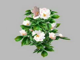 White Camellia Flower 3d model