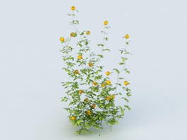Yellow Flower Shrub 3d model