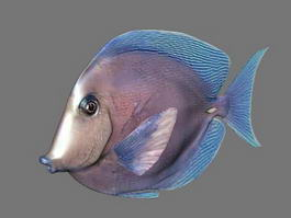 Porgy Fish 3d model