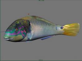 Grouper Fish 3d model