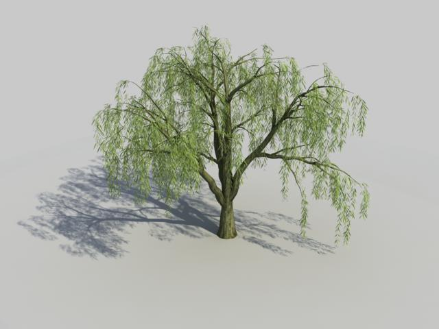 Salix Willow Tree 3d model