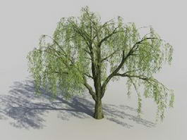 Salix Willow Tree 3d model