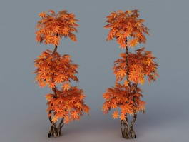 Red Dragon Japanese Maple 3d model