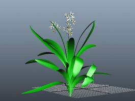 Ground Orchids Plants 3d model
