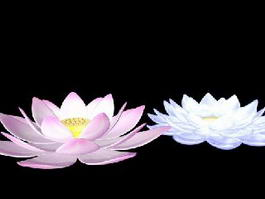 Pink and White Lotus Flowers 3d model