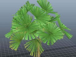 Mangrove Fan Palm 3d model