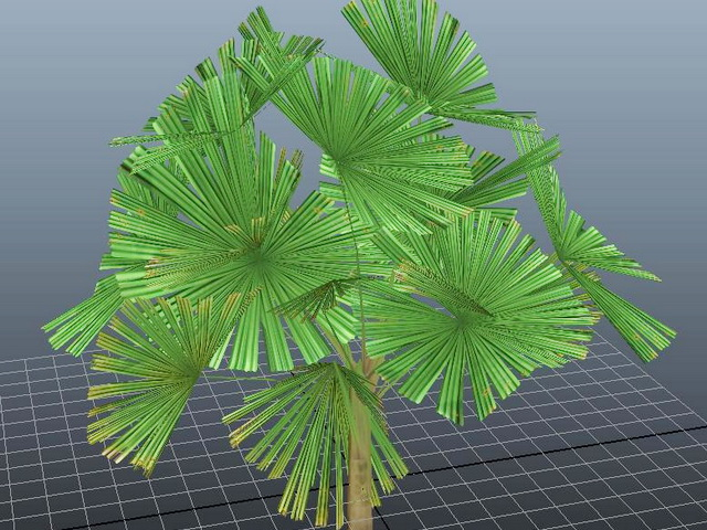Mangrove Fan Palm 3d model