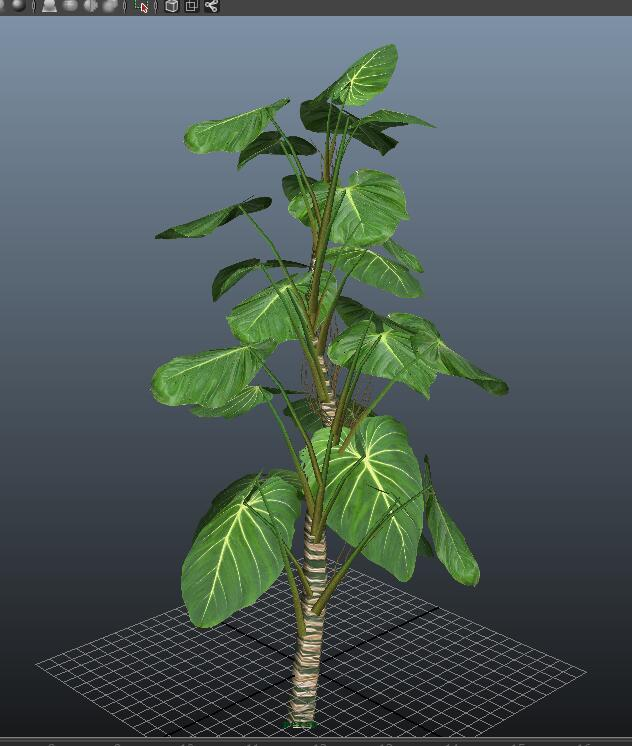 Giant Philodendron Plant 3d model