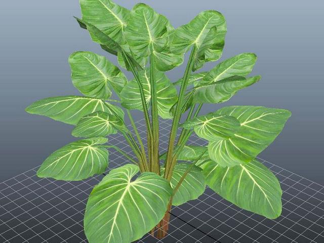 Giant Philodendron Plant 3d Model Autodesk Fbx Files Free
