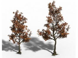 Small Maple Trees 3d model