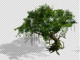 Old Banyan Tree 3d model