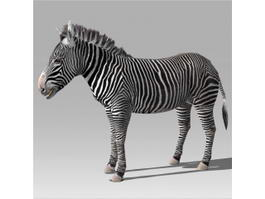 Zebra Rig & Animated 3d model