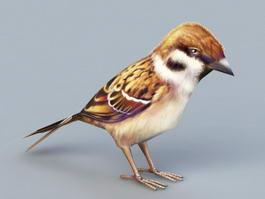 Sparrow Bird 3d model