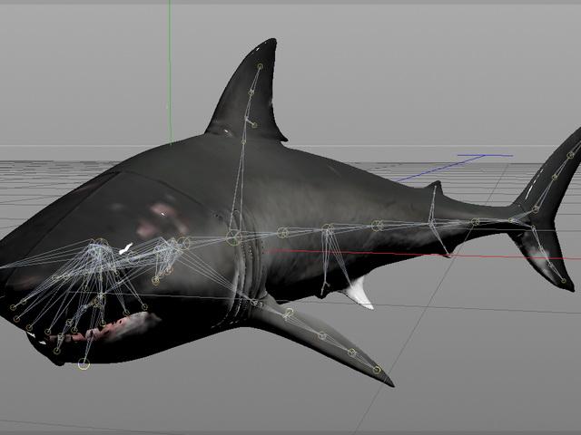 Great White Shark Rig 3d Model 3ds Max Cinema 4d Autodesk
