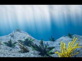 Underwater Scene 3d model