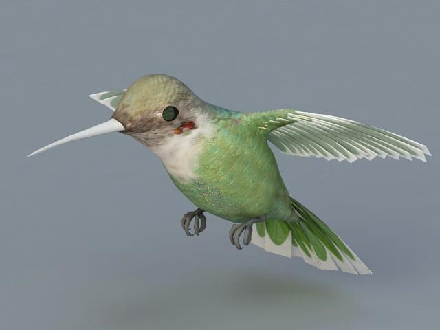 Bee Hummingbird 3d model