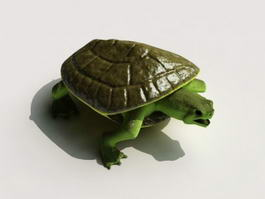 Green Sea Turtle 3d model