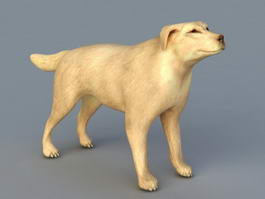 Great Dane Dog 3d model